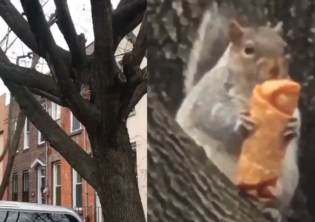 #EggRollSquirrel: New York Rodent's Diet Fail Is All of Us in 2019