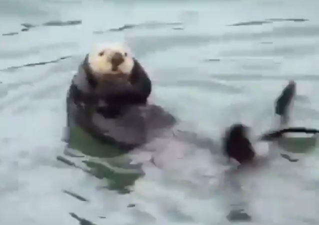 Otter exercising