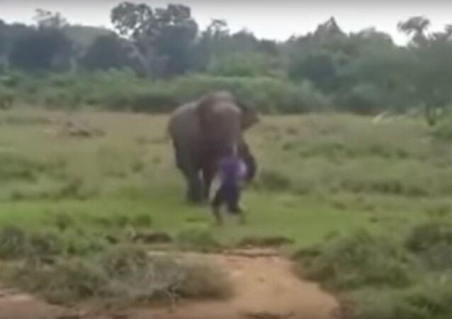 Elephant attack man-Sri Lanka