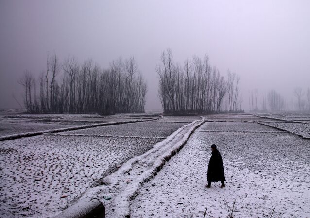 A man walks through a paddy field during snowfall on a cold winter morning in Pattan, north of Srinagar, January 2, 2019