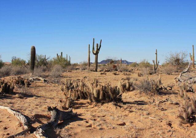 Desert landscape on the Cabeza Prieta National Wildlife Refuge Image from Public domain images website