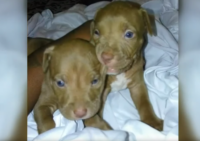 US Capital Police Hunt 'Armed & Dangerous' Suspect After Two Puppies Stolen