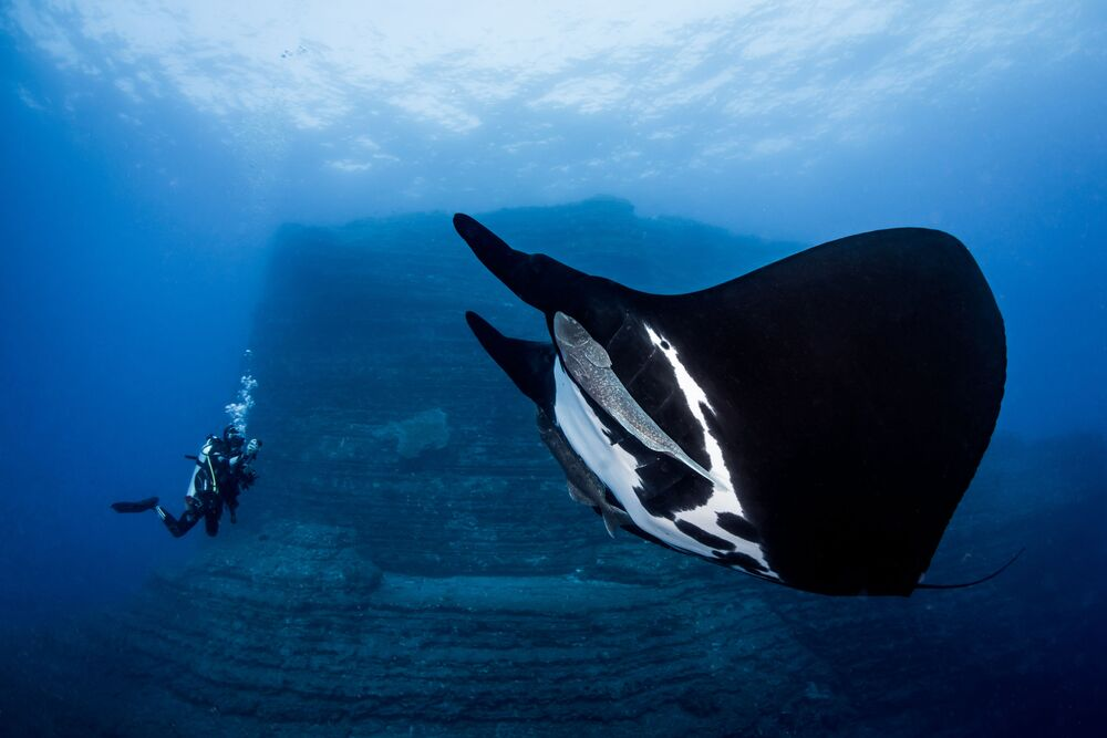Massive Sea Devil Captured for the Shot  Special Encounter That Won First Prize at Novice DSLR Category  at 7th Annual Ocean Art Underwater Photo Contest