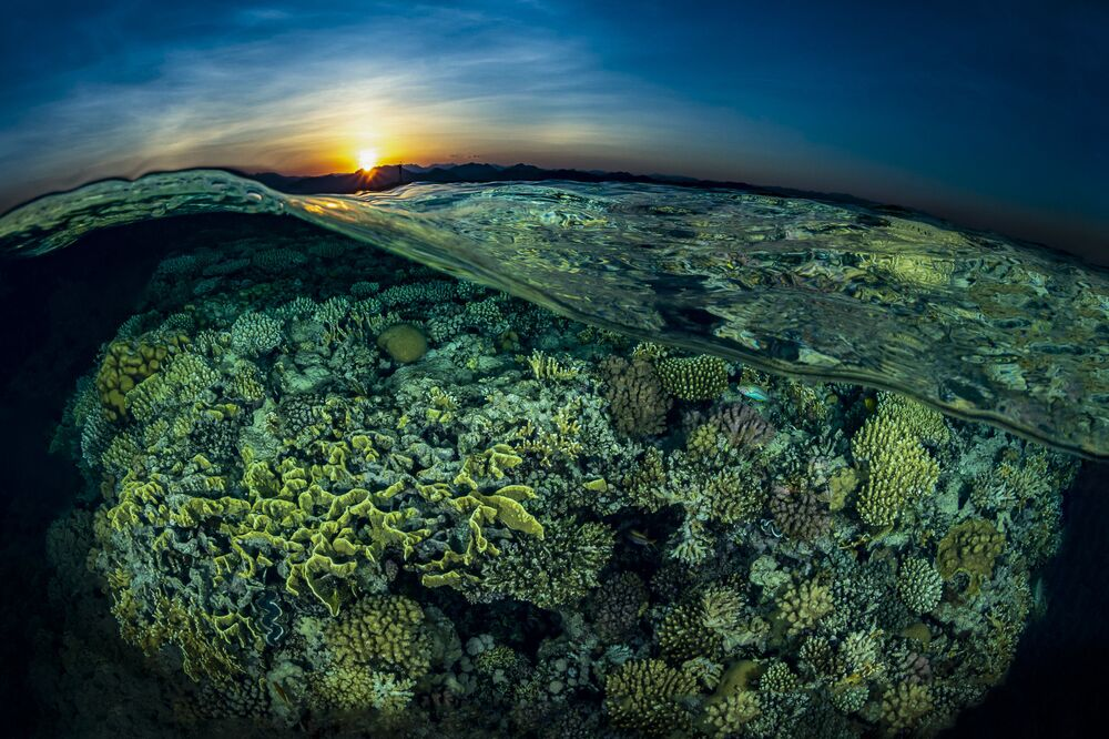 Gordon Reef Pictured for Sunsplit Shot That Won Second prize in Reefscapes Category at 7th Annual Ocean Art Underwater Photo Contest