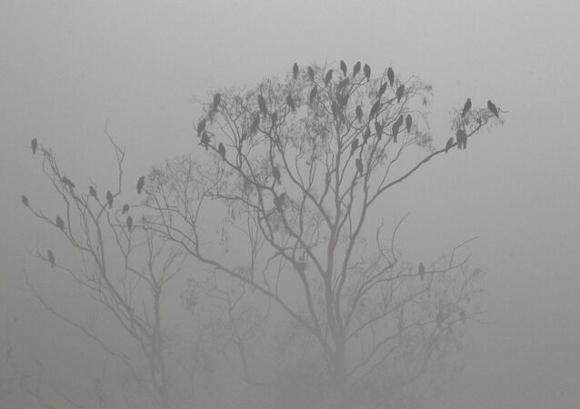 Birds sit on a tree in the dense smog