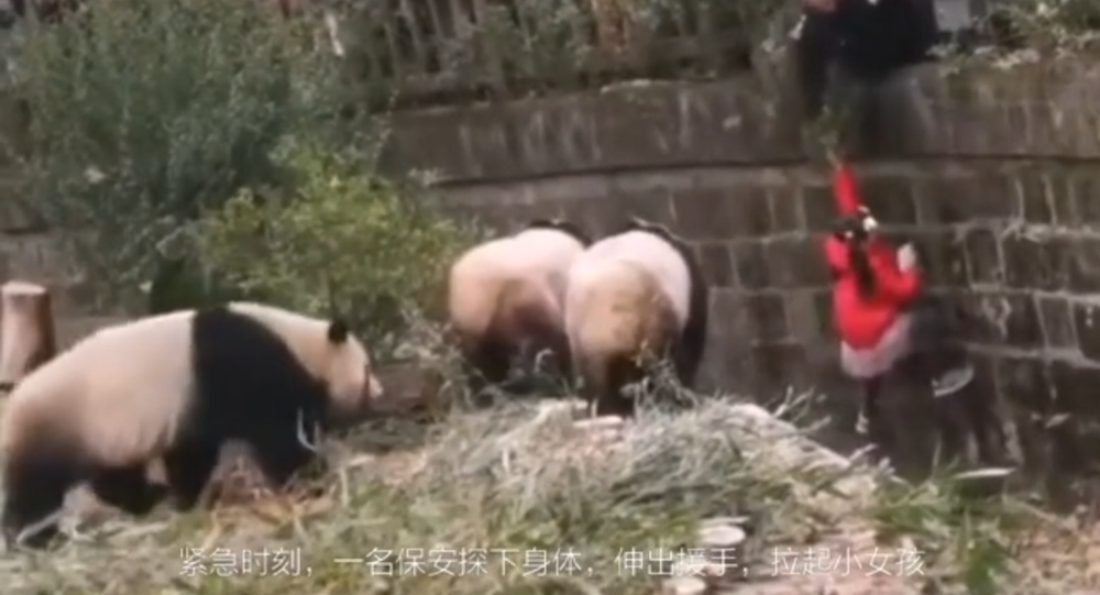 Girls Fell Into an Enclosure with Pandas