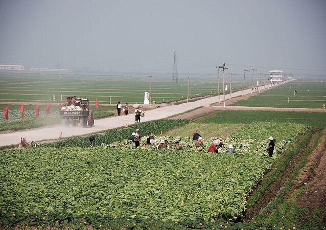 Migok Farm. Sariwŏn, North Korea