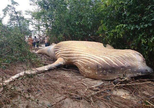 dead whale in found in jungles