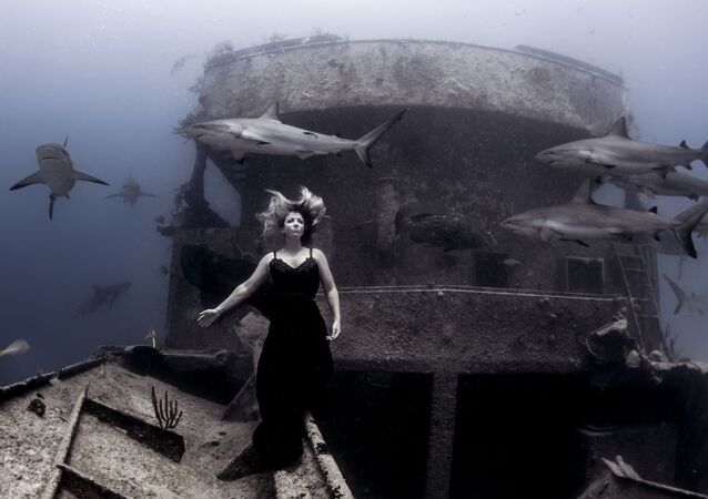 Under the Sea: Underwater Photographer of the Year 2019
