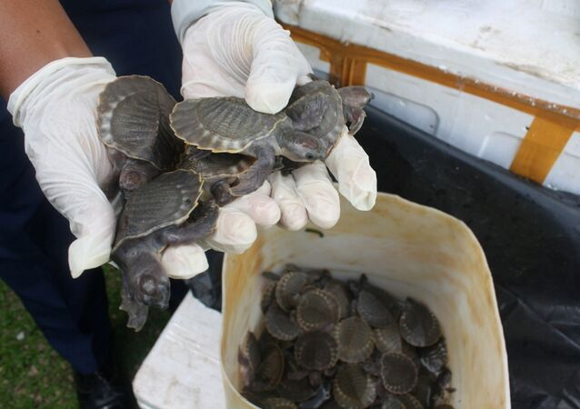 Thousands of Smuggled Rare Turtles Seized by Malaysian Authorities