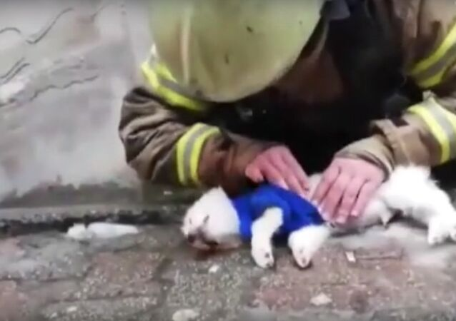 Firefighter gives CPR to a dog after saving dozens in Anhui
