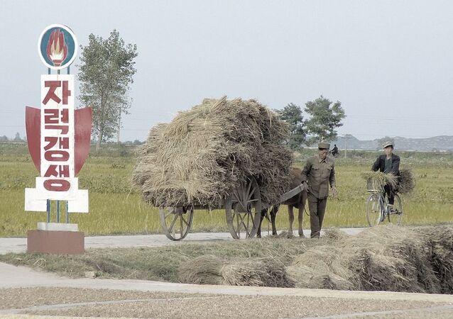 Chonsam Cooperative Farm, Wonsan, North Korea