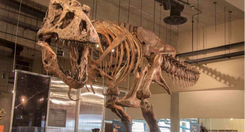 World's Biggest T-Rex Unearthed in Canada