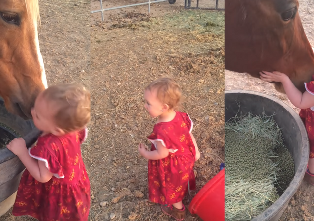 Horses Receive Hugs, Good Night Kisses from Toddler