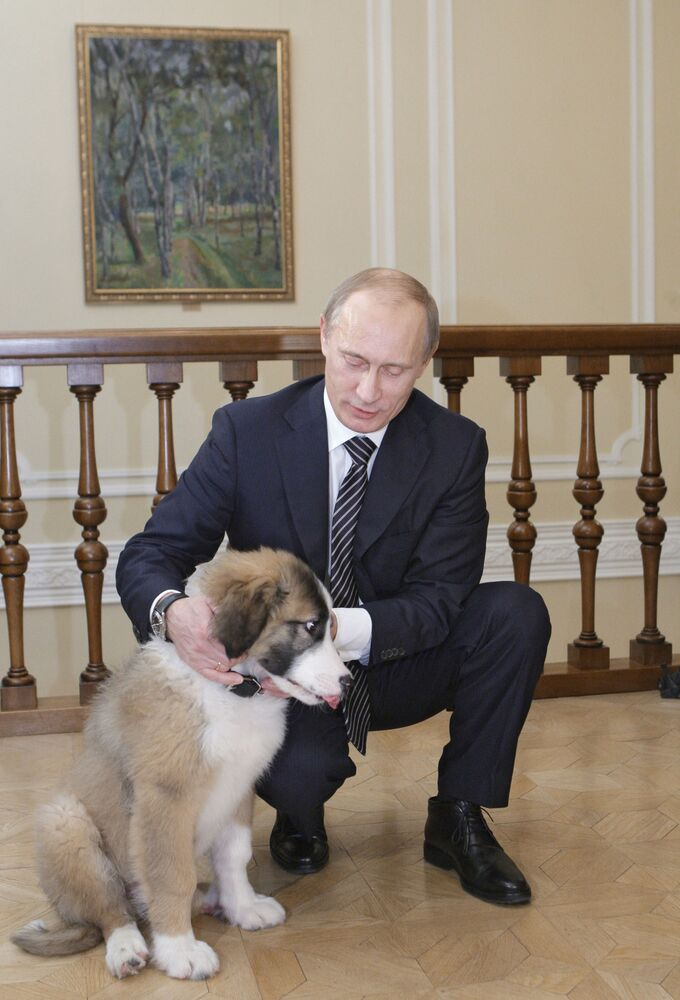 Surprise for Mr President: Tigers, Horses and Dogs Presented to Putin