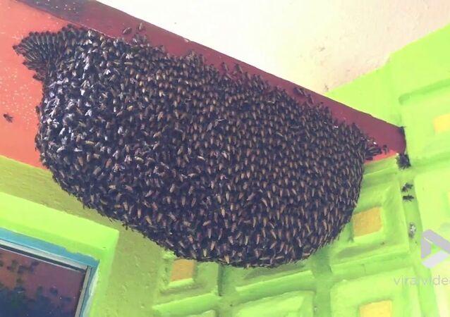 Honeybees Create Defensive Wave