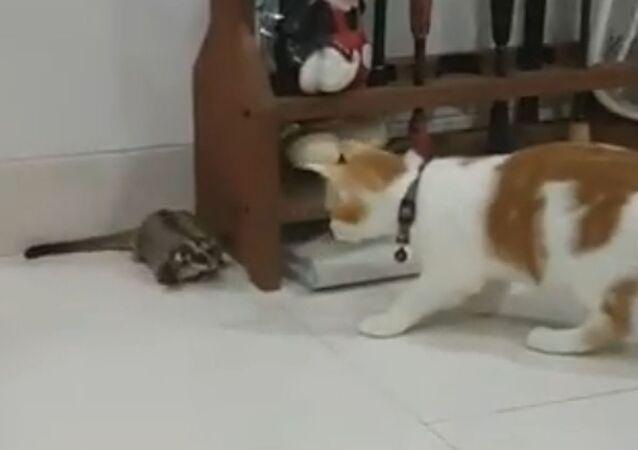 A cat and a sugar glider