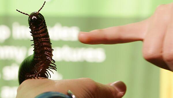 A Giant African Millipede - Sputnik International