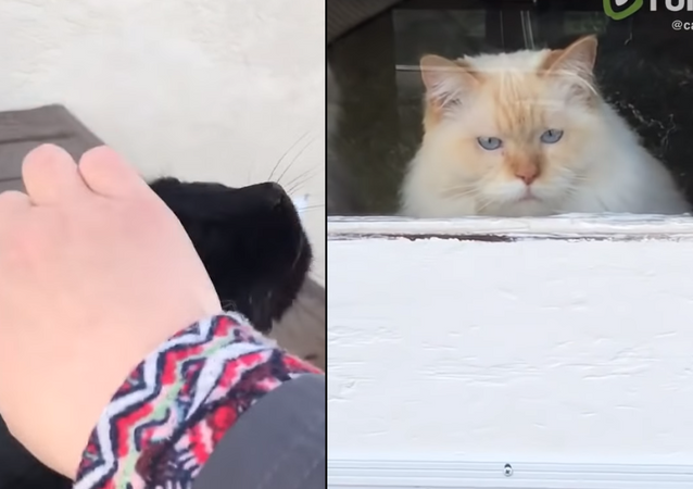 Petty Petting: Cat Peeved as Stray Shown Affection