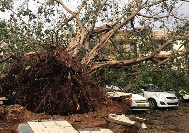 Cars are damaged by an uprooted tree in a residential area following Cyclone Fani in Bhubaneswar, capital of the eastern state of Odisha, India, May 4, 2019