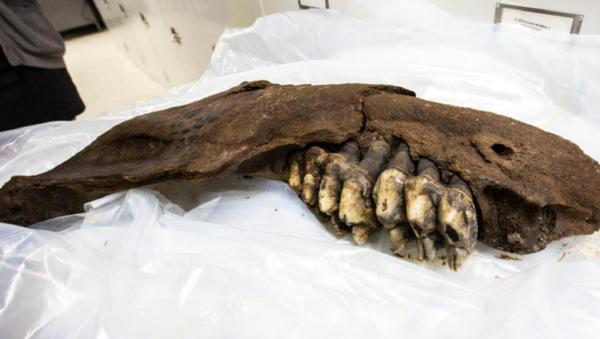 US Teen Finds 34,000-Year-Old Mastodon Jaw on Iowa Farm - Sputnik International
