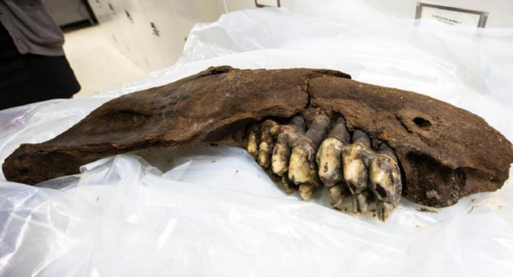 US Teen Finds 34,000-Year-Old Mastodon Jaw on Iowa Farm