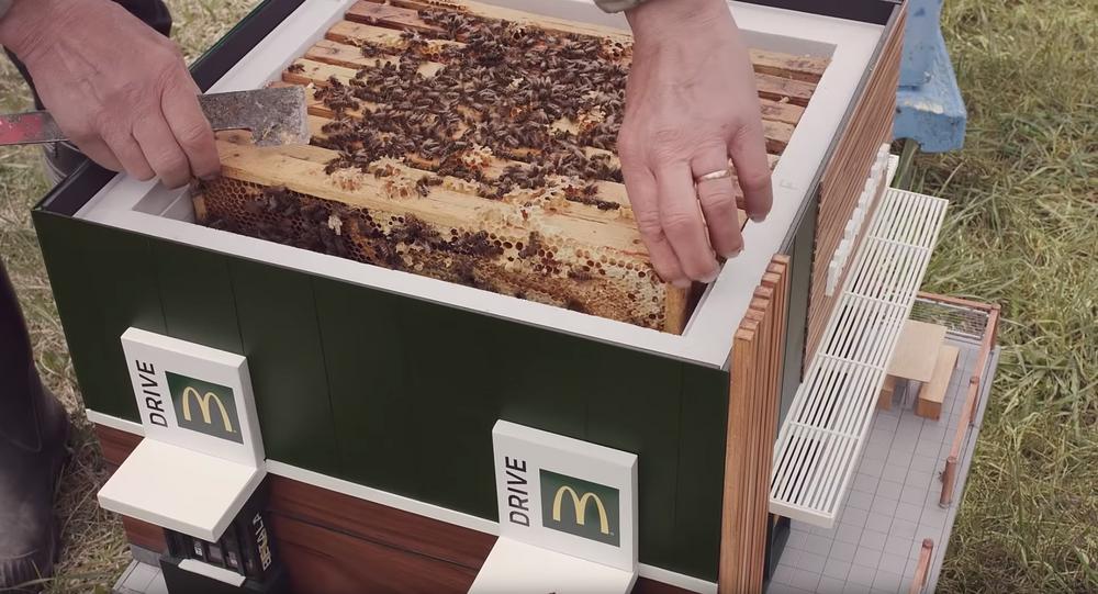 Mini McDonald's Beehives Create Buzz in Sweden