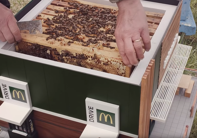 Mini McDonald's Beehives Create Buzz in Sweden
