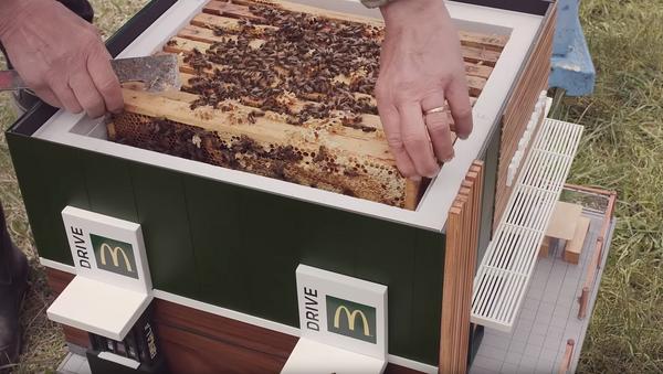 Mini McDonald's Beehives Create Buzz in Sweden - Sputnik International
