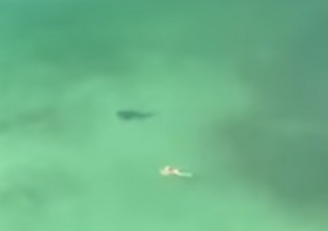 Shark checks out swimmer in Panama City Beach