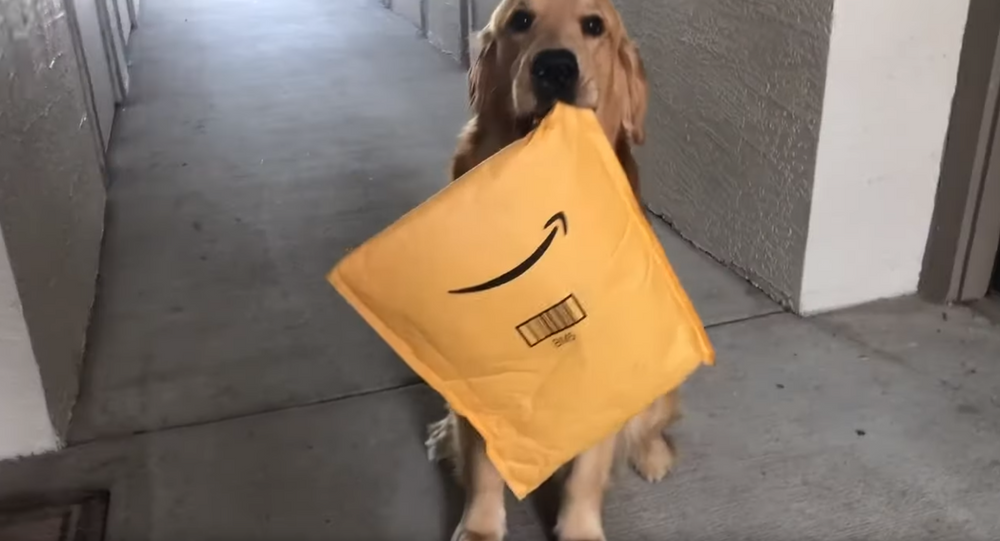 Carrier Canine: Service Dog Happily Retrieves Owner's Package