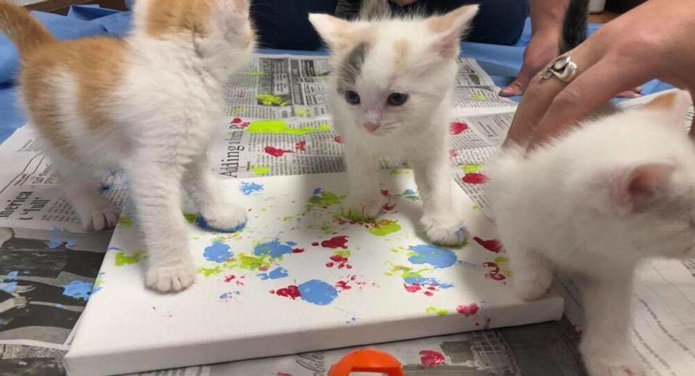 Adoption Art: Rescue Kittens Create Paw Print Paintings