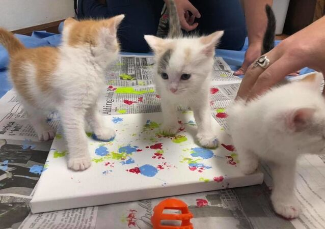 Adoption Art: Rescue Kittens Create Paw Print Paintings