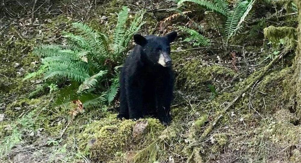 The black bear was shot and killed by wildlife officials after being familiar around people