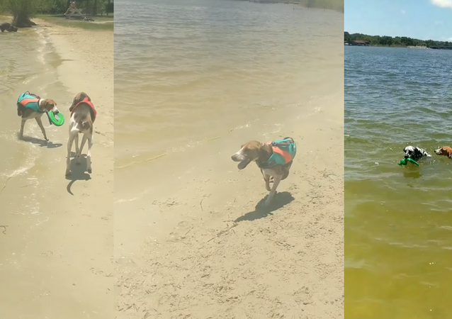 Two-Legged Dog Doesn't Let Defect Hinder His Playtime