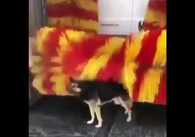 Dog at Car Wash