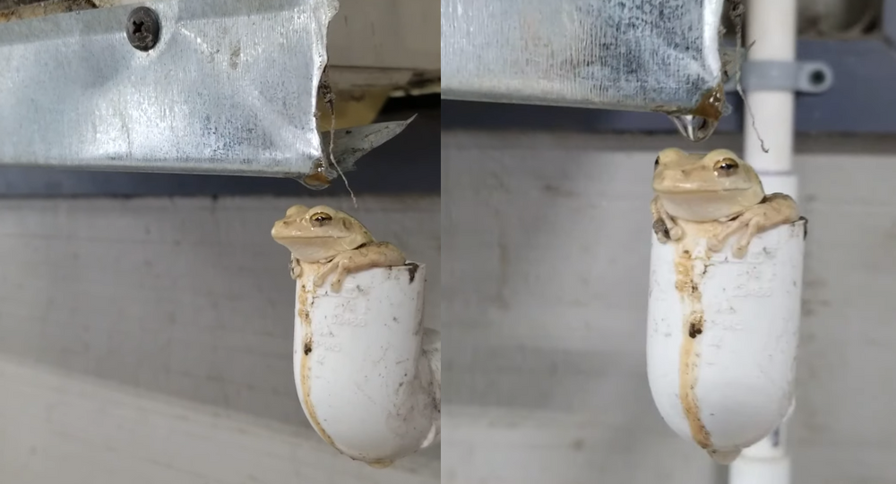 Florida Frog Finds Perfect Spot to Cool Off