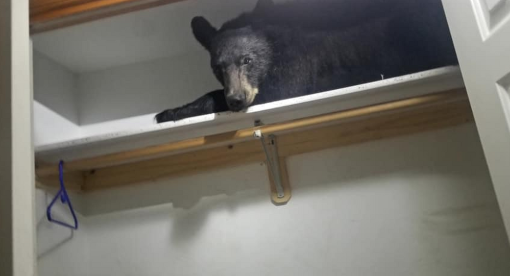 Young black bear found in Montana family's mudroom