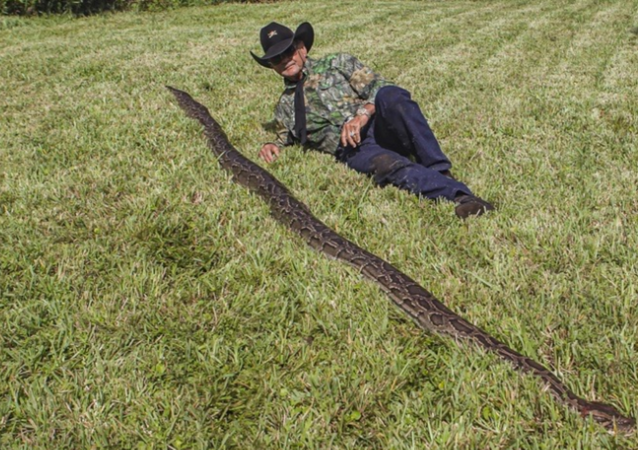 Massive 16-Foot Burmese Python, Dozens of Eggs Found Under US Home