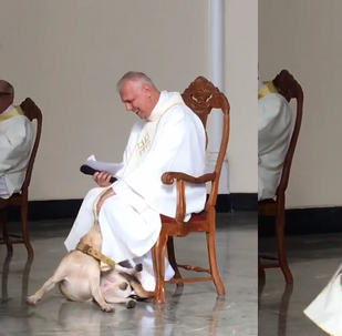 Playful Pooch Welcomed With Open Arms During Mass in Brazil