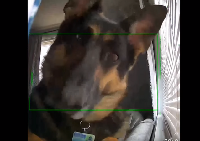 Who's There? German Shepherd Guard Dog Triggers Security Camera