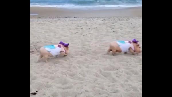 Pigs on a beach - Sputnik International