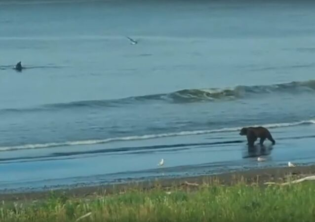 Bears and whales together are engaged in water procedures