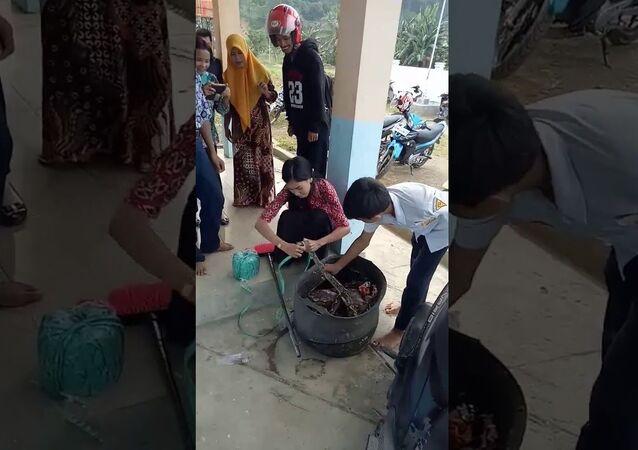 Aksi Berani Ibu Guru di Mamuju Tengah Tangkap Ular Piton dari Tempat Sampah