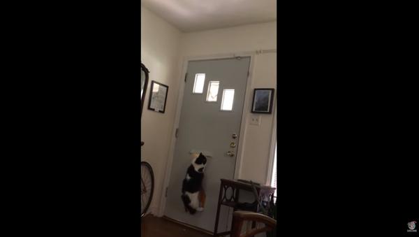 Mail Delivered Through Door Slot Leaves Cat Seeing Red - Sputnik International