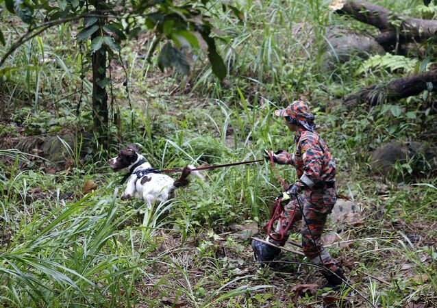 A member of a rescue team uses a sniffer dog to conduct a search and rescue operation for missing British girl Nora Quoirin