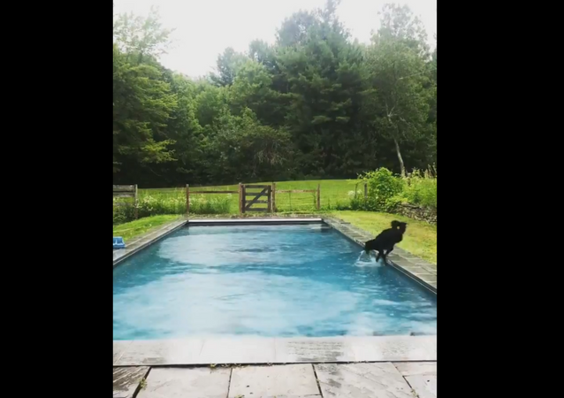 Dog's Attempt to Avoid Falling Into Pool Fails Miserably