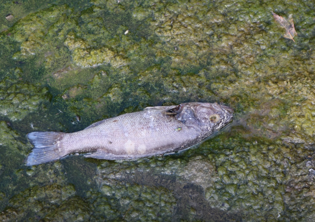 US Chemical Spill Leaves Beaches Closed, Hundreds of Fish Dead