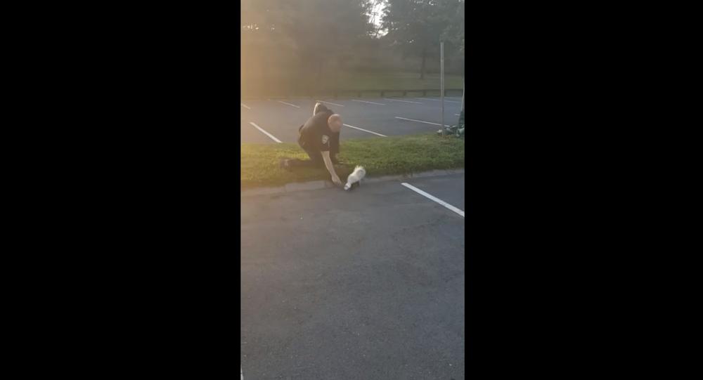 US Cop Gets Sprayed After Helping Struggling Skunk