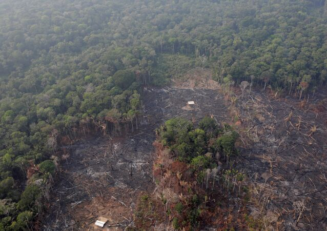 An aerial view of a deforested plot of the Amazon near Humaita, Amazonas State, Brazil August 22, 2019